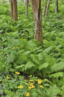 usa/ferns bells run creek chanticleer garden wayne
