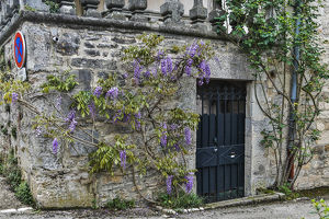 architecture/france cajarc wisteria covered stone wall
