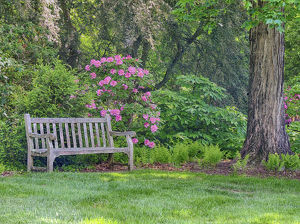 usa/hydrangea shrub park bench