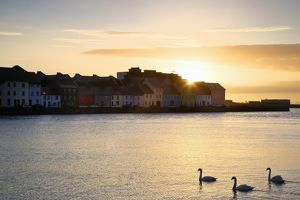 Ireland, Claddagh. Sunrise on town and swans on Galway Bay