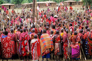 Lolgorian, Kenya. Siria Maasai Manyatta; mass of women with sticks prepared ready