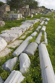 Marble columns lying on the ground in the hippodrome, Tyre, Lebanon