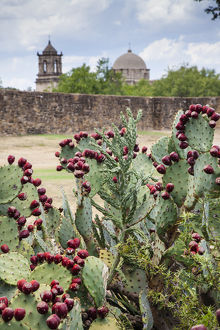 <b>San Antonio Missions</b><br>Selection of 54 items