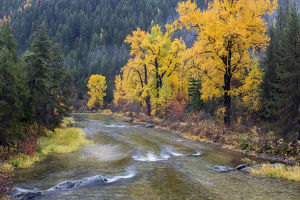 usa/montana mineral county st regis river trees