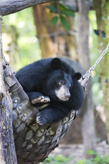Moon bears are a rare sight in the country, with the exception of this exhibit in
