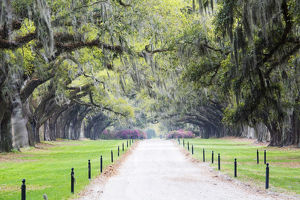 North America, USA, South Carolina, Mt. Pleasant. Driveway to Plantation House Lined
