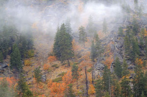 North America,USA,Washington,Leavenworth,Autumn Color in the Cascade Mountains