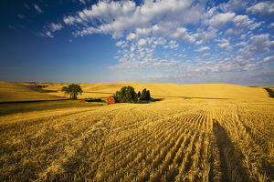 North America,USA,Washington,Palouse Country,Property Released Barn,Harvest Time Fields