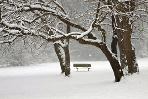 North America,USA,Washington,Seattle,Snow Covered Trees and Bench