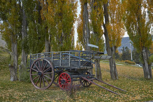 places/poplar trees old wagon el calafate patagonia