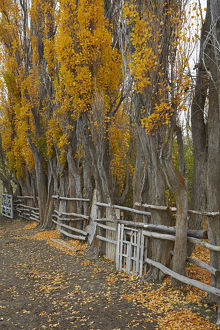 places/poplar trees stock yard la leona river patagonia