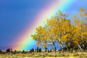 usa/rainbow aspens grand teton national park wyoming