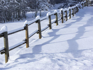 landscape/snow covered fence