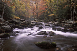 Tennessee, Great smoky Mt NP, Stream in fall at Tremont