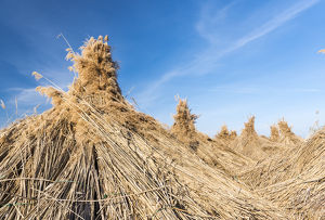 Traditional reed stack in the hungarian Puszta, Hortobagy NP, UNESCO world heritage