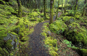 landscape/trail moss covered forest columbia river