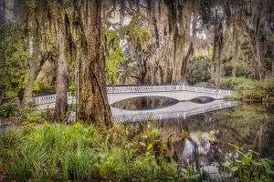 usa/south carolina/united states charleston magnolia plantation