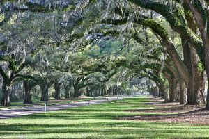 usa/south carolina/united states north carolina charleston trees