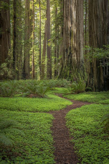 landscape/usa california jedediah smith redwoods state