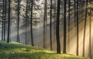 usa/usa oregon blue mountains light rays forest