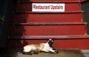 USA, Oregon, Portland. Siamese cat sunning itself at base of restaurant stairway