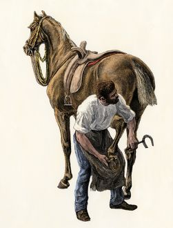 Blacksmith shoeing a horse