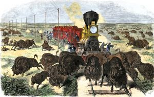 Buffalo killed from a train on the Great Plains