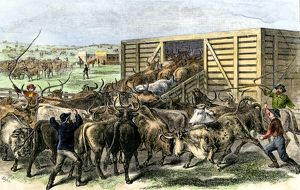 Cattle loaded on the railroad at Abilene, Kansas, 1870s