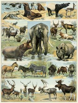 Some large mammals