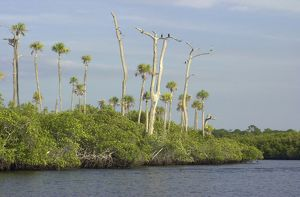 Loxahatchee River, Florida's only wild and scenic river