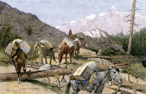 Pack horses in the Rocky Mountains, 1800s