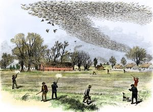 Passenger pigeons filling the skies before they were hunted to extinction