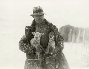 Lambs in Snow at Soanes Farm, Petworth, 1932