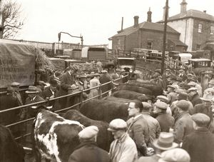 Pulborough Fat Stock Show, December 1933