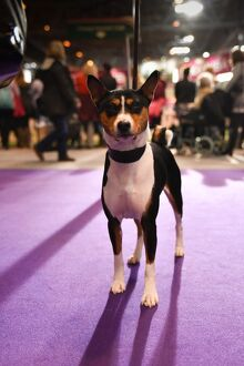 <b>Crufts 2016</b><br>Selection of 3358 items