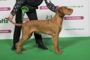<b>Crufts 2019</b><br>Selection of 657 items