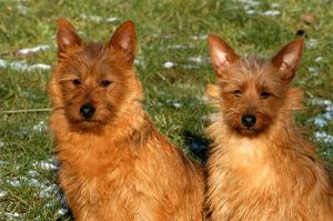 represented dog photographers/alice van kempen/couple sitting pair grass terrier two outside