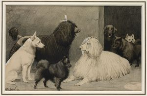 Crufts, Agricultural Hall, 1893
