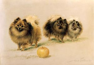 Lady Wavertree's Pomeranians
