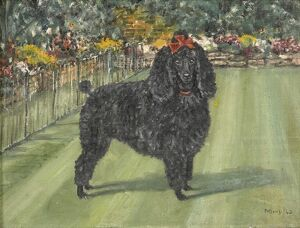 Study of a Poodle