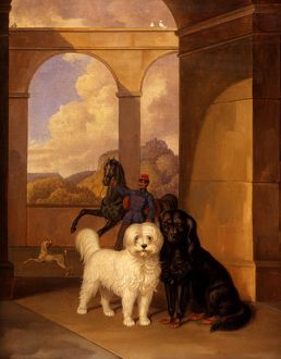 Duke Alexander of Wurttemburg's Dogs
