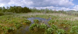 Cranesville Swamp, Spring, MD/WV', Maryland/ West Virginia