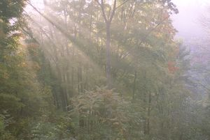 Haze from sun beams in forest on rural road, Central PA, Pennsylvania