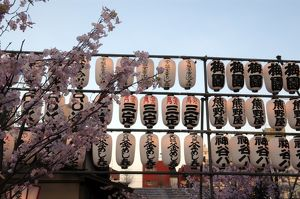 Japanese lanterns and cherry blossoms at a market in Asakusa, Japan digital capture