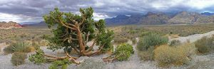 Panoramic of Desert, Red Rock Canyon National Conservation Area, NV, Nevada