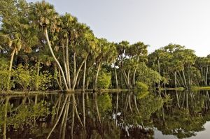 Sabal Palm-Live Oak Forest line the banks of the river