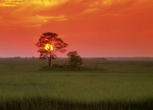 Saltmarsh Sunset, Hunting Is., SC, Fuji, sequence