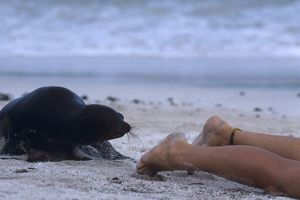 Sea Lion & Naturalist showing no fear Galapagos Is. S. America