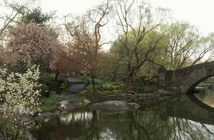 Spring in Central Park, at 59th Street, New York City, NY