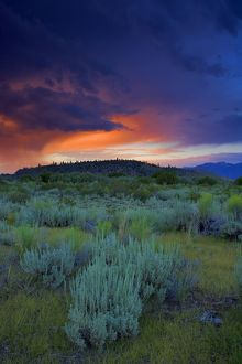 Sunset, Long Valley, Eastern Sierra Nevada, California, with typical sage-scrub vegetation